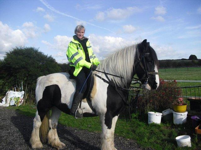 horses for loan essex area
