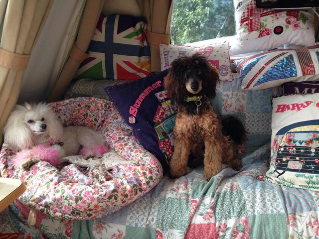 dog beds made out of old duvets