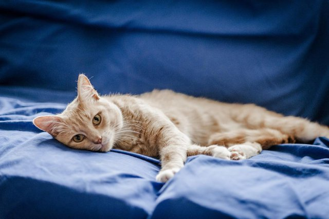 cat lying down relaxed