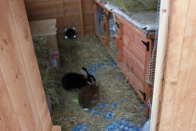 rabbits brought into the shed