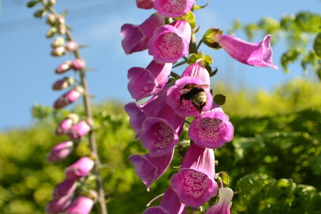 bee going into flower