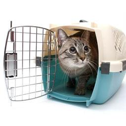cat peering out of a cat carrier