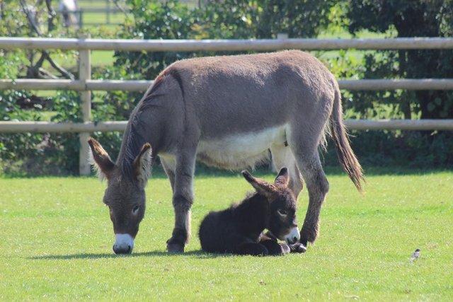 donkey and baby donkey care