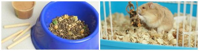 Homemade Hamster Treat Sticks