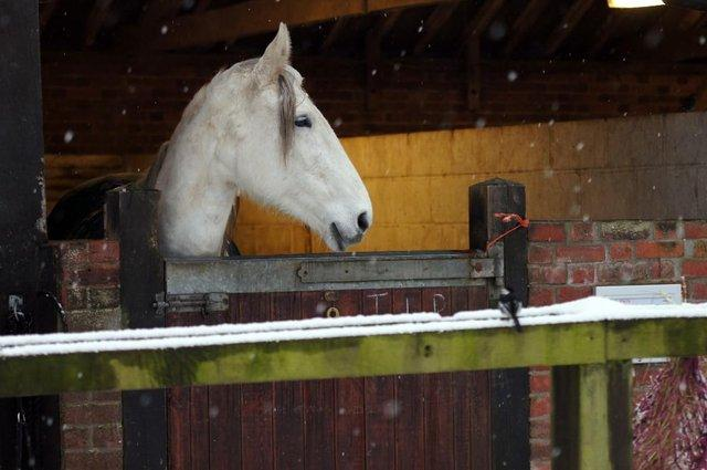 Horse in stables in snow