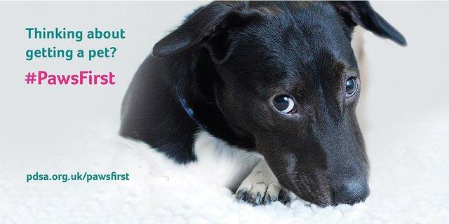 #PawsFirst Campaign banner
