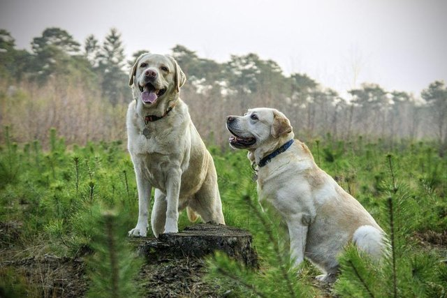 two dogs in a field