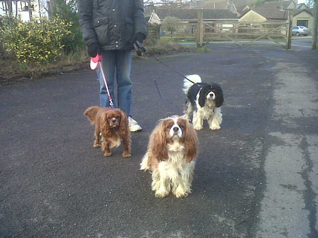 Preloved | King Charles Cavalier Rescue discussion uk