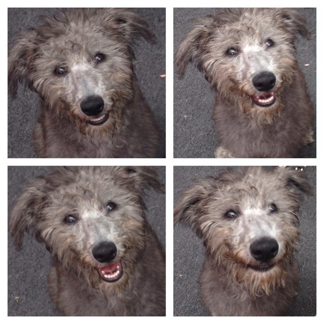 Get Dog Spayed For Free Uk