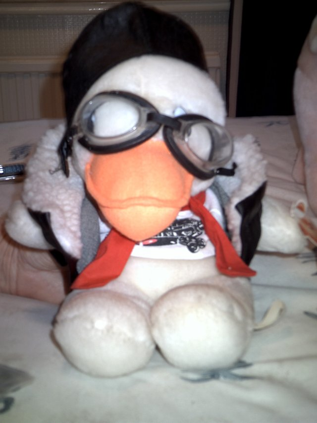 Preview of the first image of CUDDLY TOY DUCK.