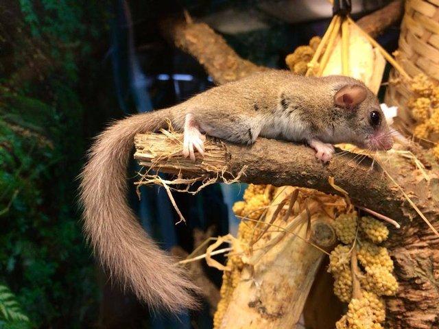 Image 2 of Stocked Exotic Mammals at Warrington Exotics