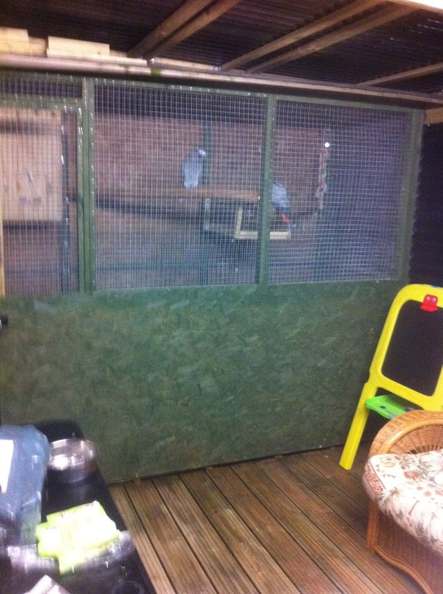 Image 3 of parrots and aviary birds wanted