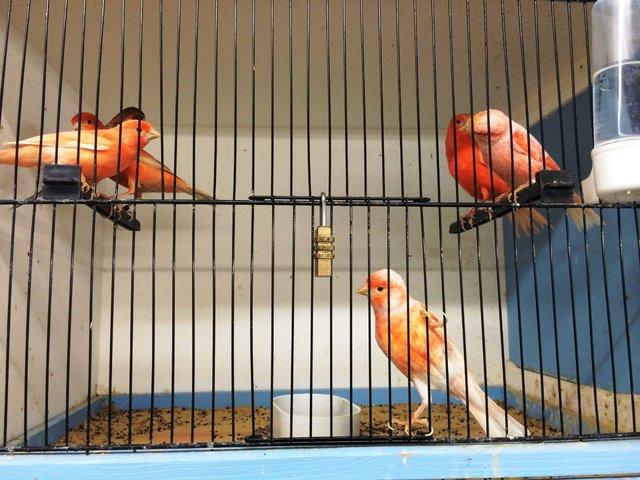 Image 7 of WARRINGTON PETS & EXOTICS BIRD PRICE LIST