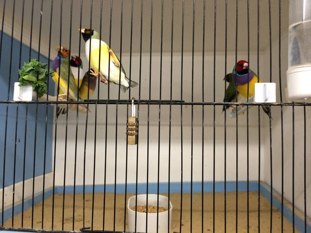Image 9 of WARRINGTON PETS & EXOTICS BIRD PRICE LIST