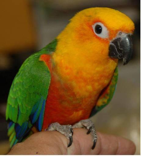 Image 10 of WARRINGTON PETS & EXOTICS BIRD PRICE LIST
