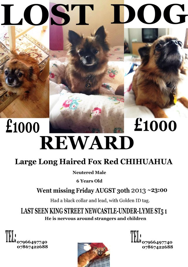 Preview of the first image of STOLEN! £2500 REWARD!CHIHUAHUA NEUTERED.
