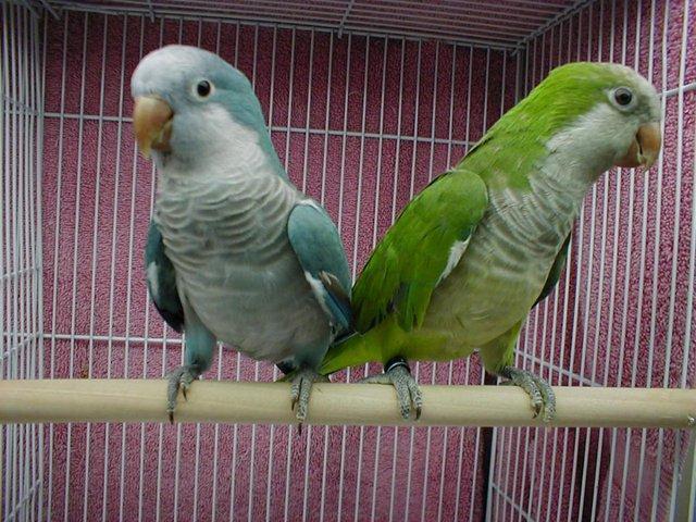 Image 11 of WARRINGTON PETS & EXOTICS BIRD PRICE LIST