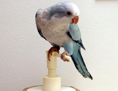 Image 13 of WARRINGTON PETS & EXOTICS BIRD PRICE LIST