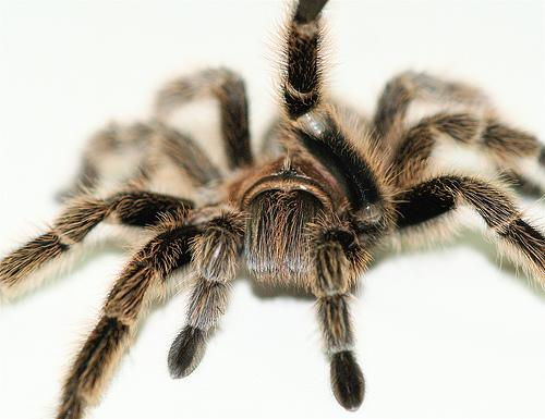 Preview of the first image of AMPHIBIANS/SPIDERS/TARANTULAS/INVERTS STOCK LIST.