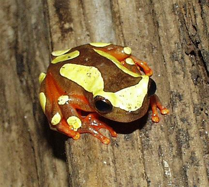 Image 3 of AMPHIBIANS AND INVERTS FOR SALE