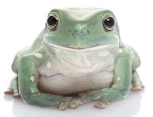 Image 5 of AMPHIBIANS AND INVERTS FOR SALE
