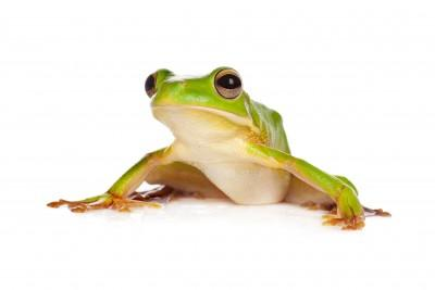 Image 6 of AMPHIBIANS AND INVERTS FOR SALE