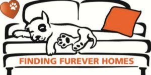 Preview of the first image of Are You Really Ready To Adopt A Rescue Dog?.