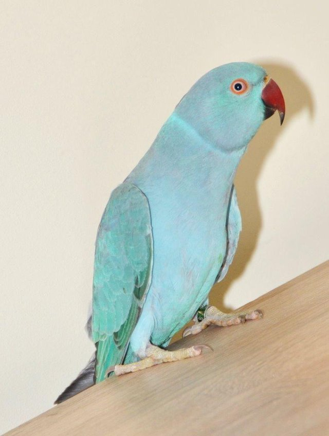Image 3 of Mixed pet and aviary birds available