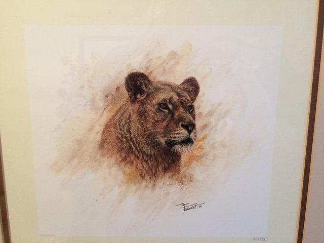 Image 2 of Pair of Limited Edition 'Big Cat' Prints by Tony Forrest