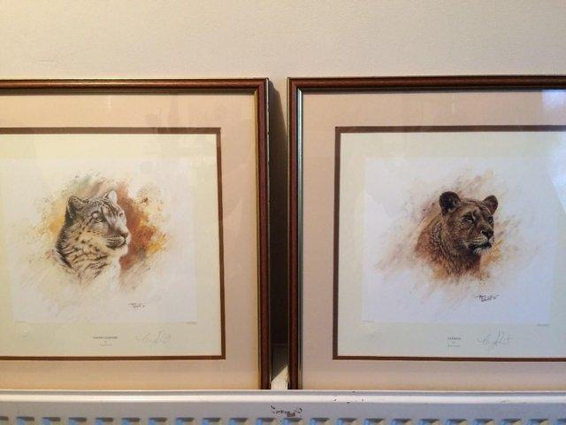 Preview of the first image of Pair of Limited Edition 'Big Cat' Prints by Tony Forrest.