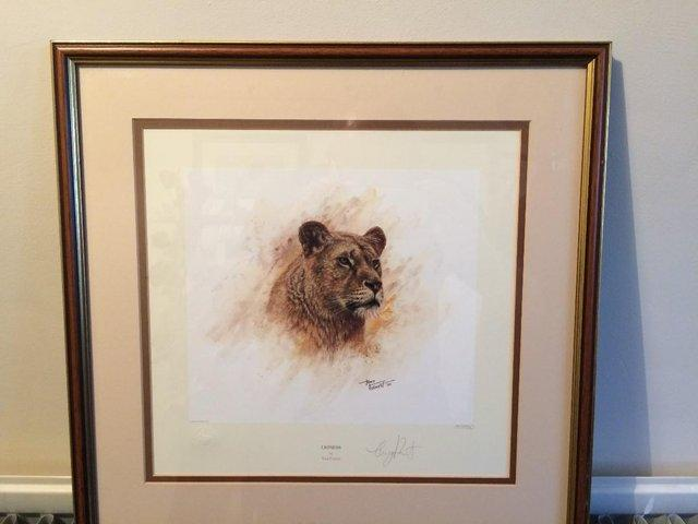 Image 3 of Pair of Limited Edition 'Big Cat' Prints by Tony Forrest