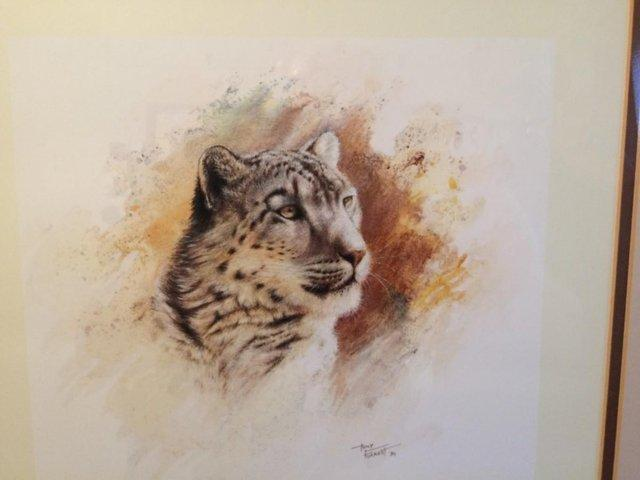 Image 5 of Pair of Limited Edition 'Big Cat' Prints by Tony Forrest