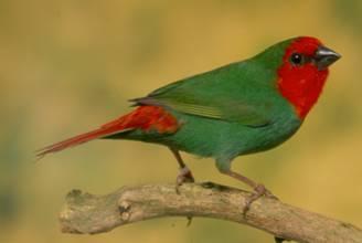 Image 14 of WARRINGTON PETS & EXOTICS BIRD PRICE LIST