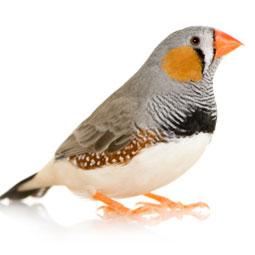 Image 15 of WARRINGTON PETS & EXOTICS BIRD PRICE LIST