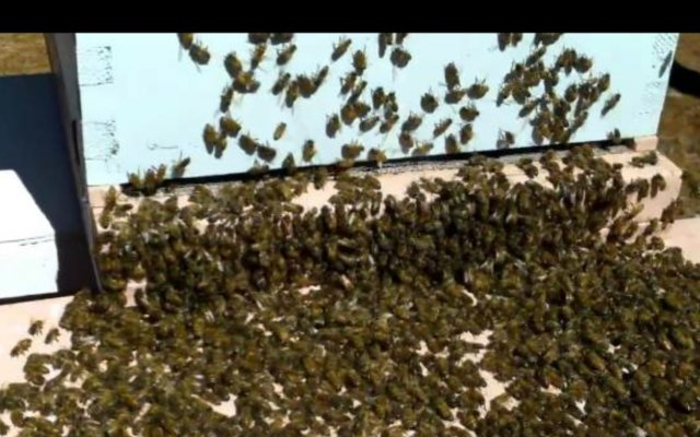 Preview of the first image of Swarms.