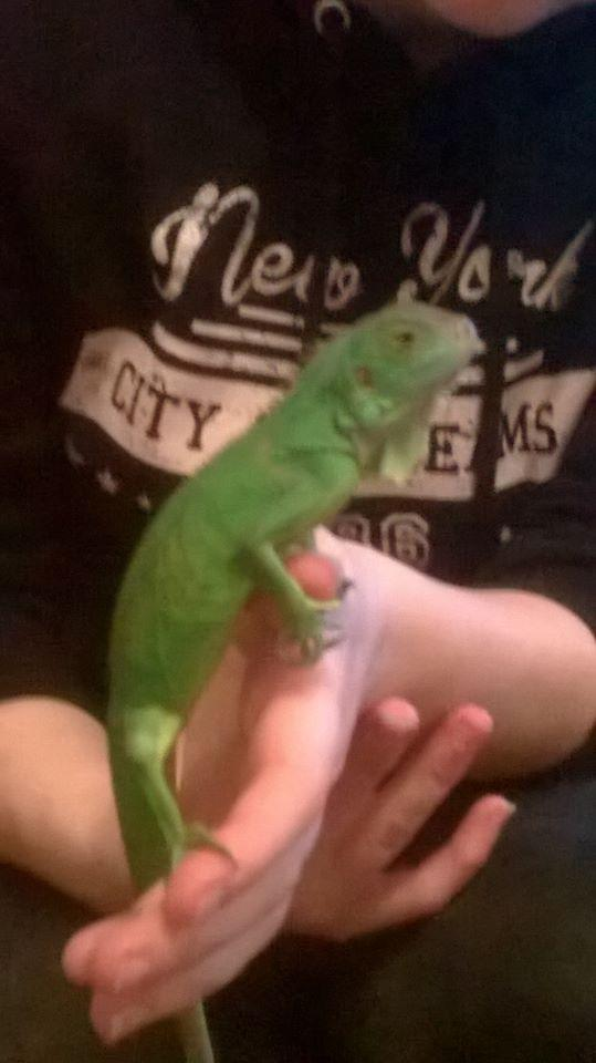 Reptile Rescue Reptiles Rehome Buy And Sell In Lancashire Preloved