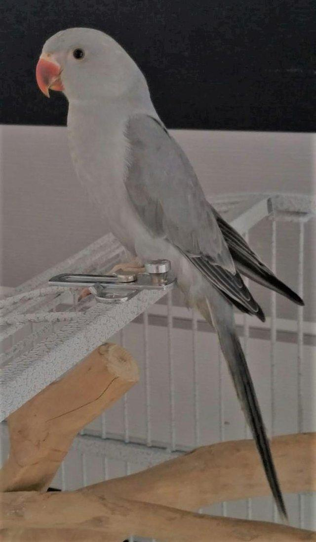 Image 4 of Mixed pet and aviary birds available