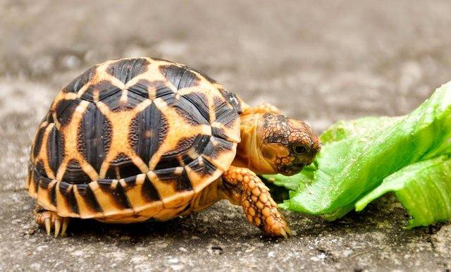 Image 8 of Baby Tortoises for sale