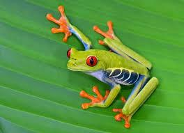 Image 8 of AMPHIBIANS AND INVERTS FOR SALE