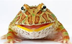 Image 11 of AMPHIBIANS AND INVERTS FOR SALE