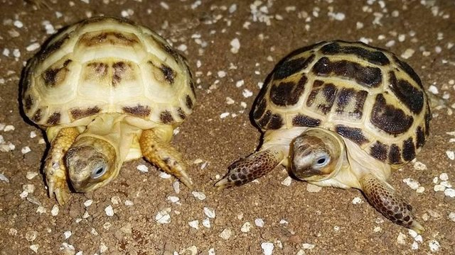 Image 3 of Current Chelonia (Tortoise and Turtle) Stocklist