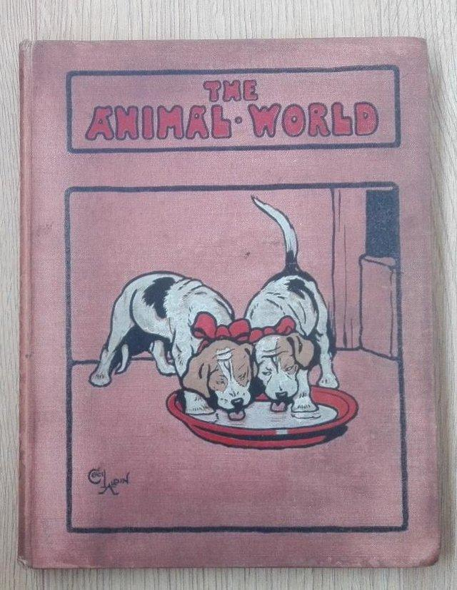 """Preview of the first image of Rare """"THE ANIMAL WORLD""""Volume 4 dated 1909."""