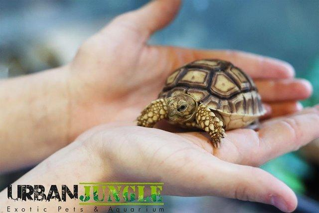 Image 4 of Current Chelonia (Tortoise and Turtle) Stocklist