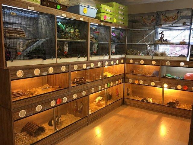 Mammal Room