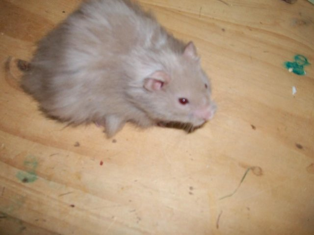 Image 3 of loving forever home offered to any unwanted rodents