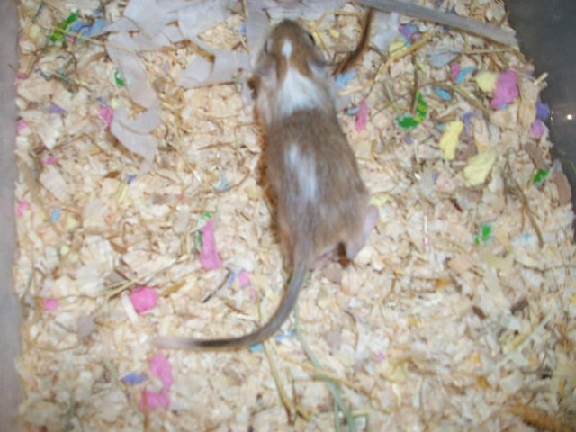 Image 5 of loving forever home offered to any unwanted rodents