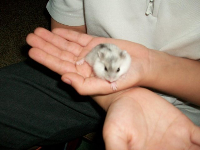 Image 8 of loving forever home offered to any unwanted rodents