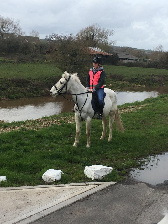 appaloosa horse pony - Horses & Ponies, Rehome Loan and Sell