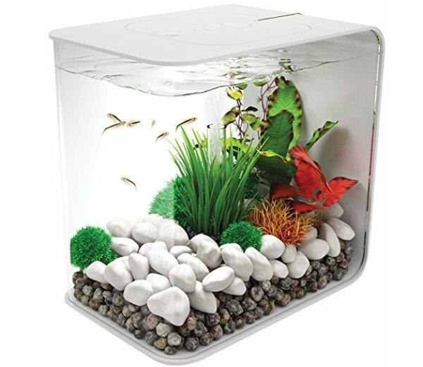 Image 4 of Fish Tanks Available At The Marp Centre