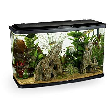Image 8 of Fish Tanks Available At The Marp Centre
